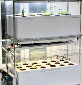 Aeroponic Systems